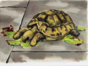 Schildkröte I