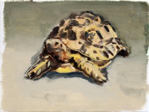 Schildkröte II