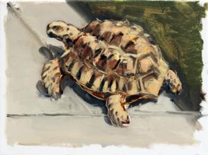 Schildkröte III